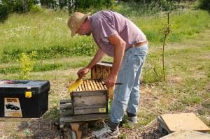 Bienenzüchter (Foto: Hans-Werner Krick)